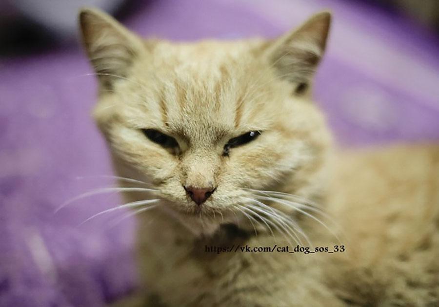 Школьники изМурома забили палками четырех котят