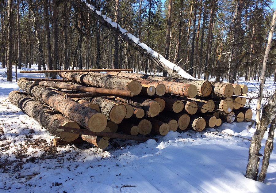 картинки рубленных деревьев регулятор находится под