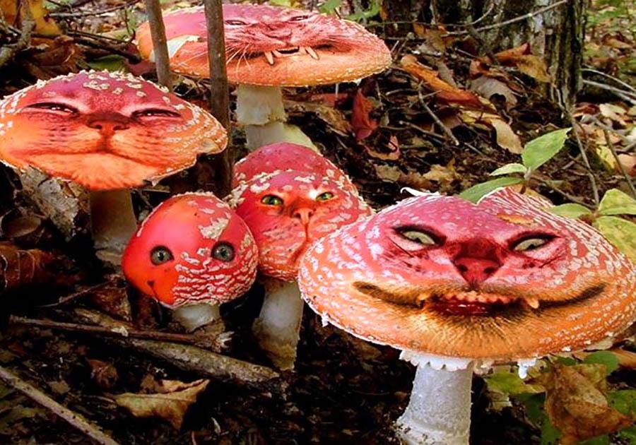В РФ могут ввести налог насбор грибов иягод