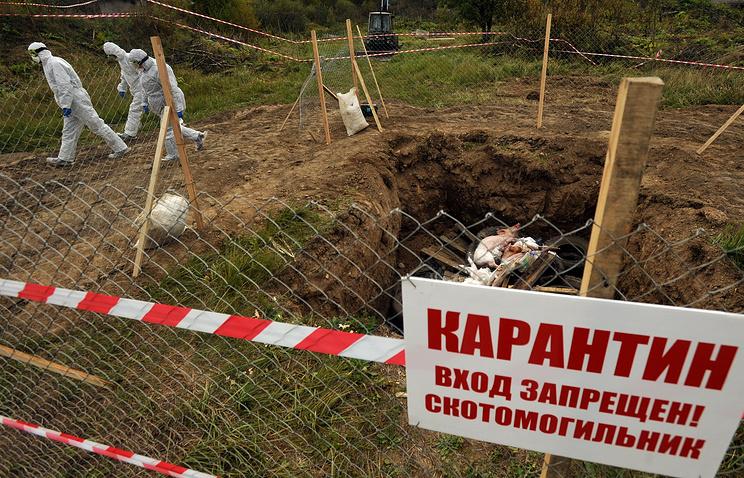 Наферме вНиколаевской области зафиксировали вспышку чумы свиней
