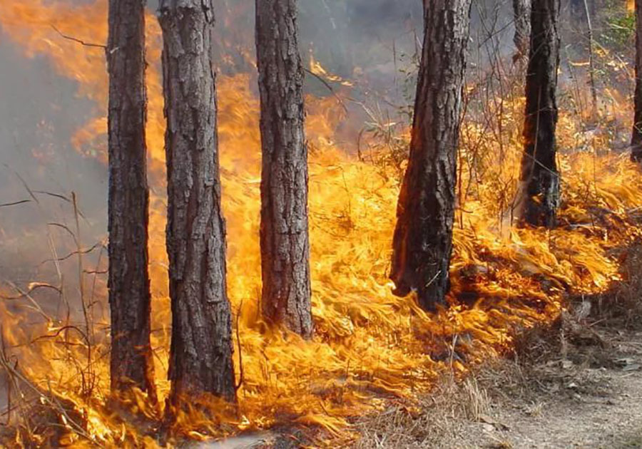 Специалисты  оценят вред  природе отразлива топлива нареке Нерехта